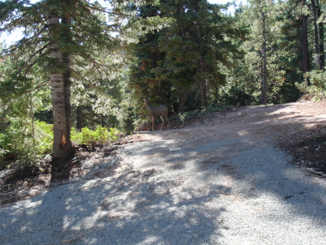 DUCK CREEK REAL ESTATE, ZION VIEW LOT FOR SALE, PINK HOODOO VIEWS