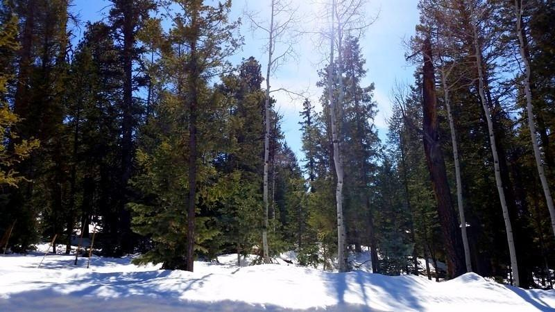 DUCK CREEK REAL ESTATE, LOT FOR SALE BORDERING DIXIE NATIONAL FOREST