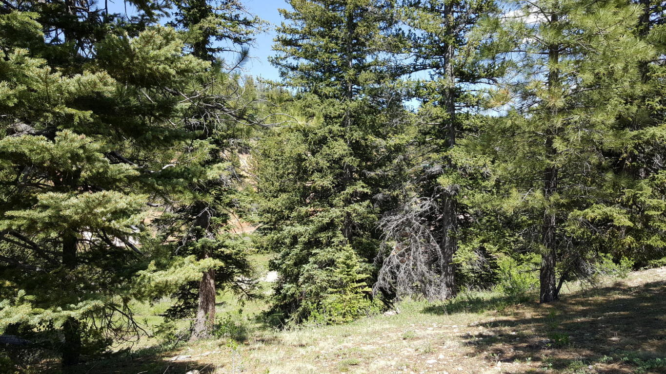 Duck Creek Real Estate, Swains Creek lot for sale