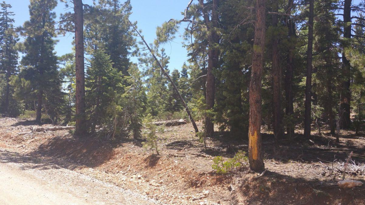 Duck Creek Real Estate, 2 lots for sale
