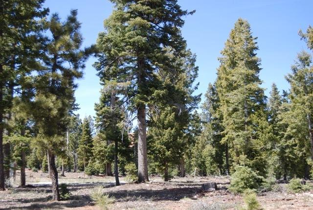 Duck Creek Pines lot for sale