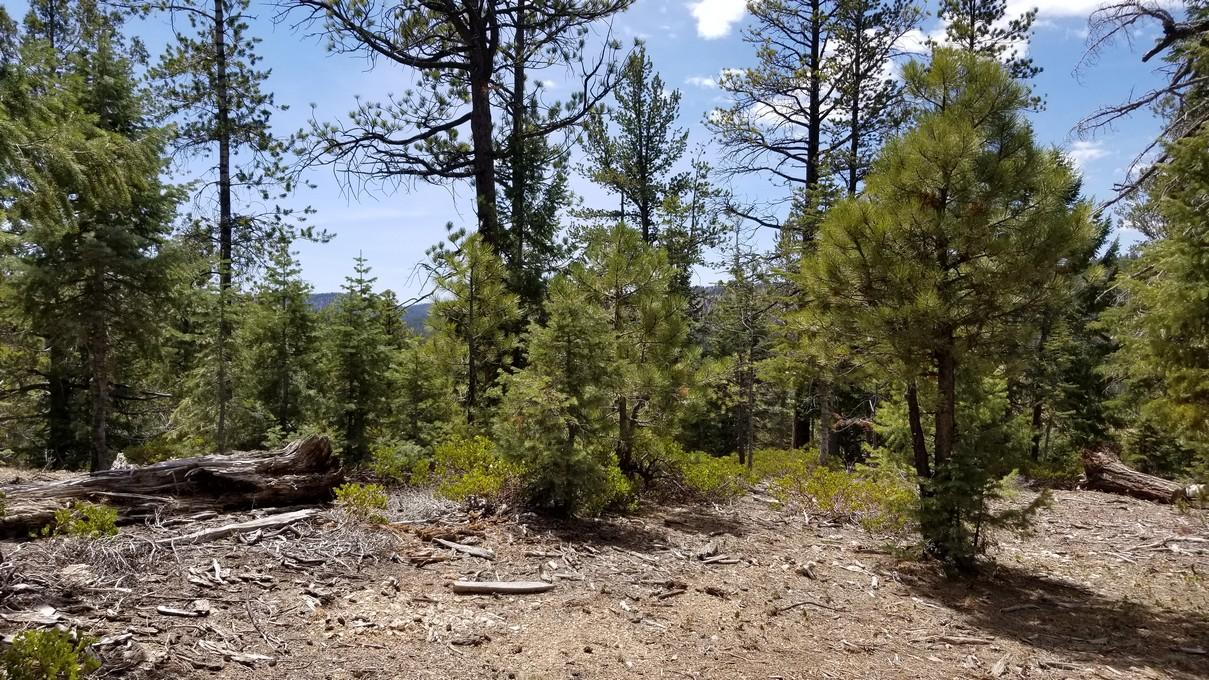 Duck Creek lot for sale