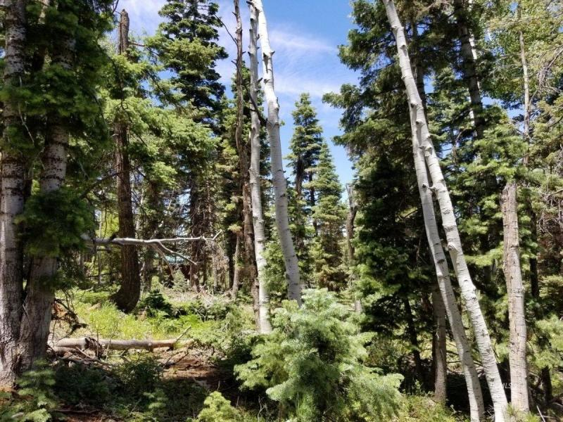 Duck Creek land for sale